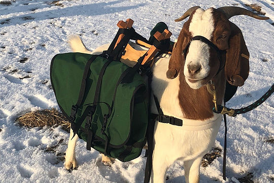 Goat Caddy